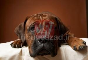 شوره پوست حیوانات خانگی