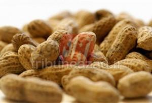 غذاهای آلرژی زا